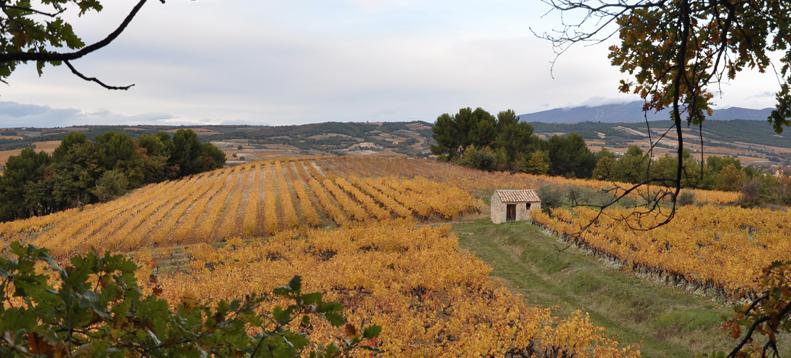 vins-buisson-vignes2