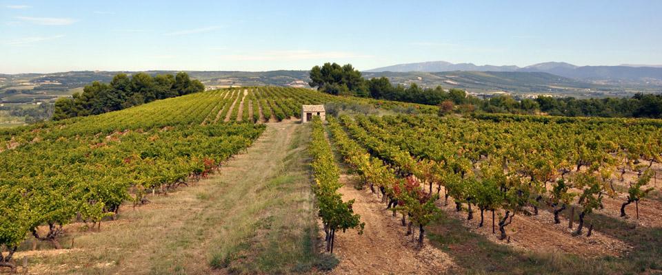 vignes-été-Buisson