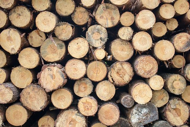 coupe bois